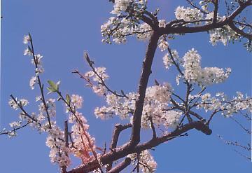青空とプラモの花