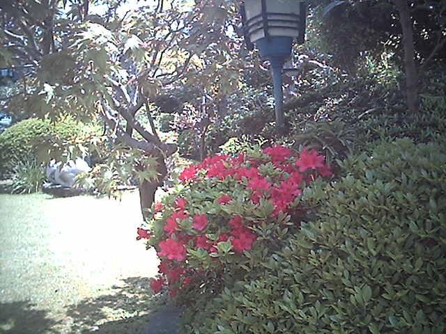 春の庭とつつじ