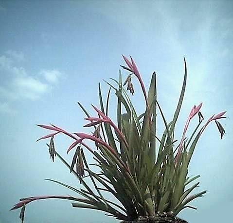 空と蘭の花