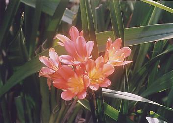 春光と洋蘭